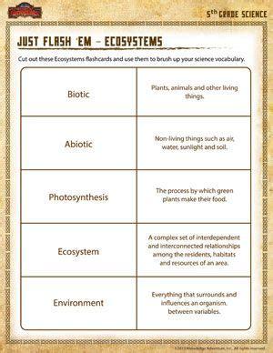 science worksheets ecosystem flash em ecosystems