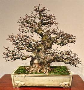 17039 besten bonsai bilder auf pinterest html garten for Whirlpool garten mit bonsai 50 years old