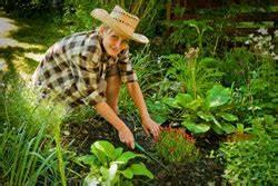 Gartenarbeit Im August : gartenarbeit im august das m ssen sie jetzt tun ~ Lizthompson.info Haus und Dekorationen
