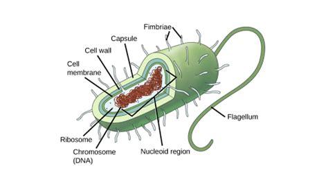 celulas procariontes articulo khan academy