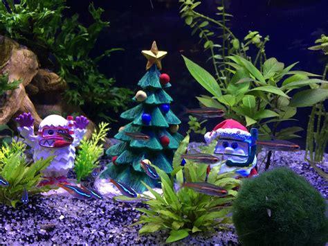 how to make professionally designed fish tank ideas