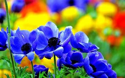 Flowers Vivid Desktop Wallpapers 4k