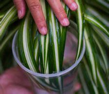 indoor  patio plants   articles  wikihow