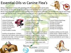 doterra essential oils for cats doterra and dogs flea season and essential oils