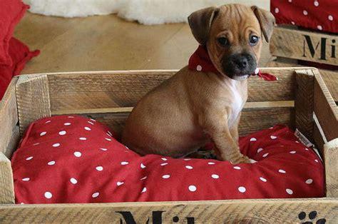 resinence cuisine revger com comment fabriquer un lit en bois pour chien