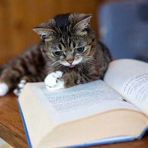 Kitty catching up on his reading! | Book Buddies ...