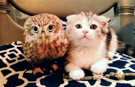 japan  baby owl  kitten     friends