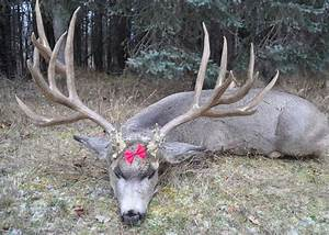 biggest whitetail deer ever killed - Movie Search Engine ...