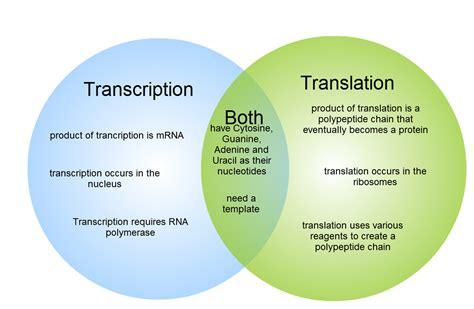 Gliffy Diagram  Transcription And Translation Venn Diagram  Nurse  Pinterest  Venn Diagrams