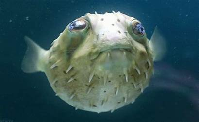 Fish Ocean Animated Underwater Gifs Animals Animations