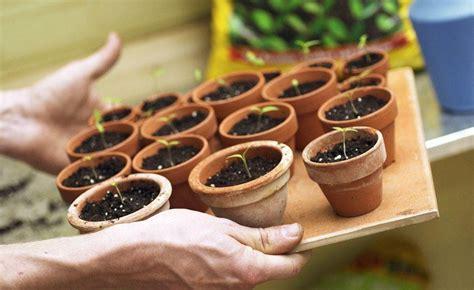Garten Pflanzen Januar by 5 Pflanzen Die Sie Im Januar Auss 228 En K 246 Nnen Garten
