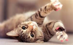 cat animal cat and lovely animal facts animals lover