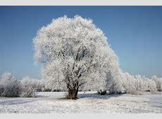Winterlandschaft Diwan Photography