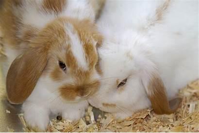 Bunnies Rabbit Bunny Desktop Wallpapers Animals Yellow