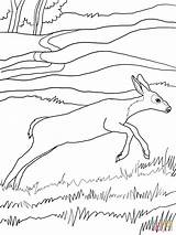 Deer Coloring Mule Pages Printable Popular Super Drawing Supercoloring Coloringhome Categories sketch template
