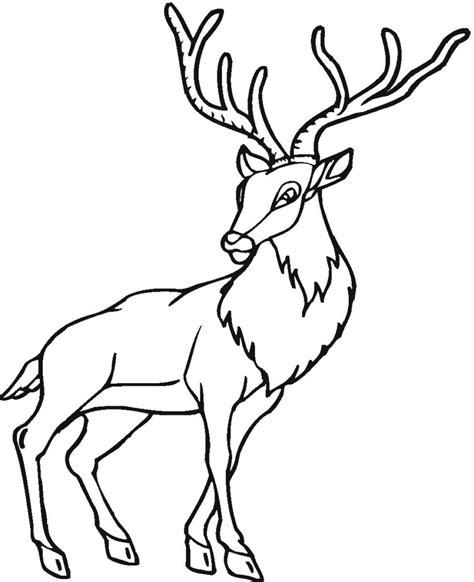 Coloring Deer by Free Coloring Pages Deer Printable Coloring Pages
