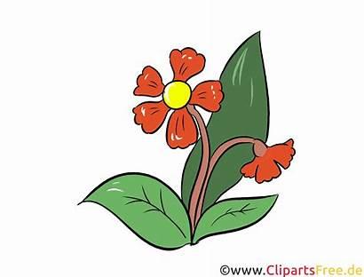 Clipart Kostenlos Marguerite Margerite Bild Gratis Blumen