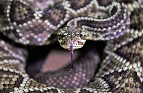Police 'Surprised' by Dozens of Deadly Snakes in Idaho Home