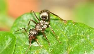 Ameisen Im Rasen Wirksam Bekämpfen : ameisen im rasen bek mpfen so haben sie erfolg ~ Whattoseeinmadrid.com Haus und Dekorationen