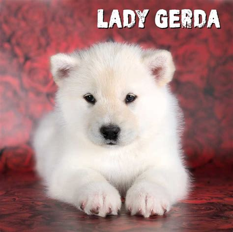 Lady Gerda ith is a White and Giant Alaskan Malamute Puppy ...