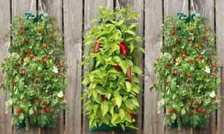Hanging Vegetable Garden by Organic Vegetable Garden Groupon Goods