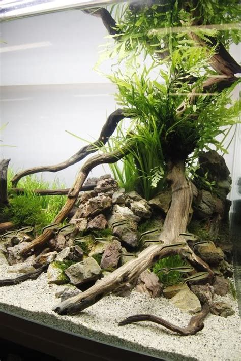 Freshwater Aquascape by Best Aquascaping Freshwater 103 Meowlogy