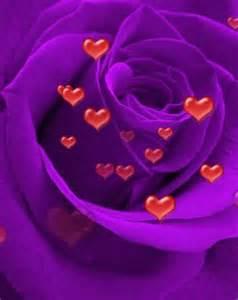I Love You Roses and Purple Rain