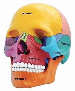 Tedco Toys Human Anatomy