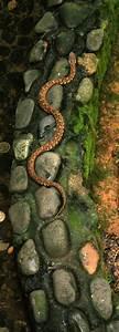 Snake Island | Hangzhou, China: Zhejiang University