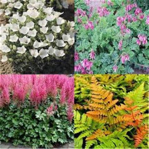onlineplantcenter 1 gal shade garden 4 live plants