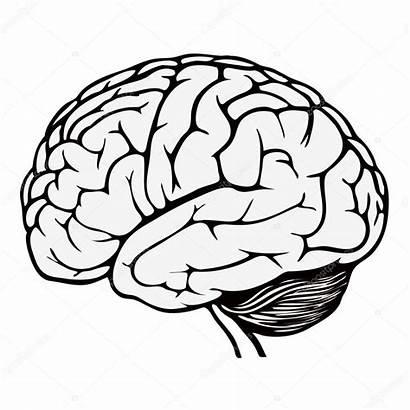 Brain Human Drawing Illustration Coloring Line Printable