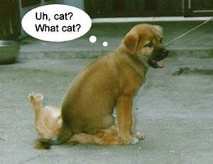 Cute and funny dogs and cats together pics (part 2 ...