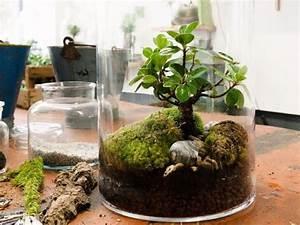 Bonsai Im Glas : bild zu der mini garten im glas dies und das pinterest terraria bonsai and houseplants ~ Eleganceandgraceweddings.com Haus und Dekorationen