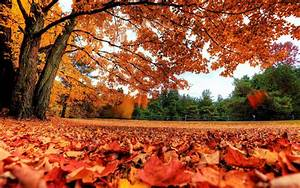 Autumn Leaves Backgrounds - Wallpaper Cave