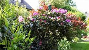 Rhododendron Blüten Schneiden : rhododendron radikal runter schneiden newwonder555 youtube ~ A.2002-acura-tl-radio.info Haus und Dekorationen