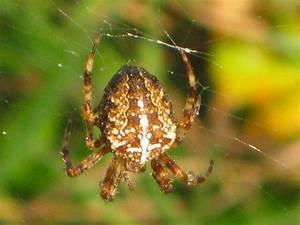 Pflanzen Gegen Spinnen : wald und wald der gegenwart ~ Lizthompson.info Haus und Dekorationen
