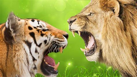 tiger fight wallpaper   gamefree  game