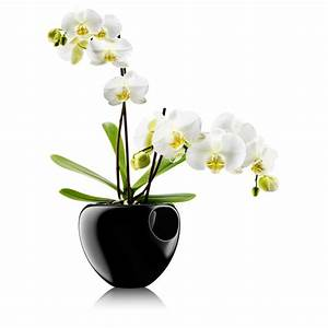 Orchid Pot by Eva Solo in the design shop