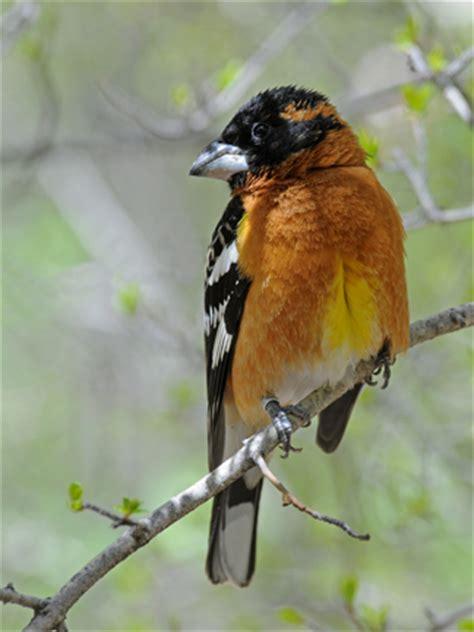 birds mount sutro forest
