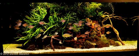 Biotope Aquascape by 1000 Images About Blackwater Biotopes On