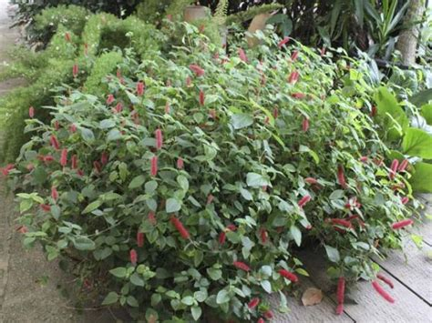 plants suitable for shade plant finder search results page 3 search criteria suitable for shade