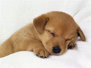 Cute Puppy Photos : My10Online