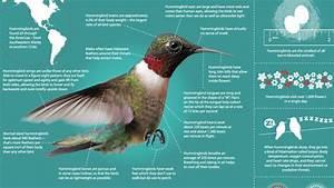 Hummingbirds  Magic In The Air