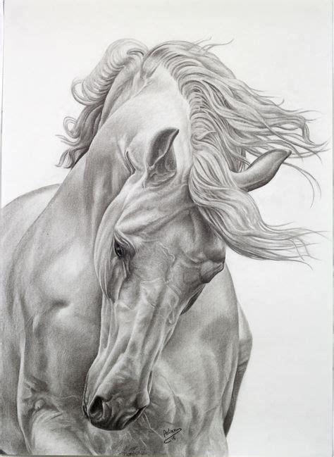 ✓ free for commercial use ✓ high quality images. Die 45 besten Bilder von Pferde zum zeichnen in 2019 ...