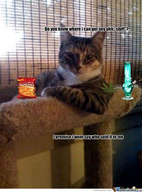 Bad Kitty Meme - bad kitty by ciararose meme center