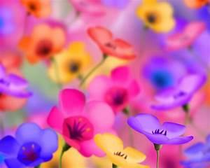 flowers for flower lovers.: Desktop background flowers ...