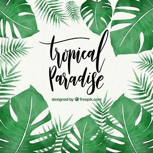 Tropical leaves Vector | Free Download