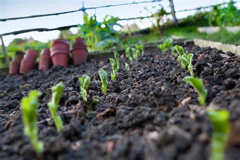 planter des aubergines