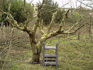 Day 6  U2013 Apple Tree Pruning