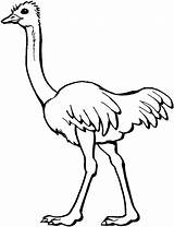 Ostrich Coloring Pages Printable sketch template